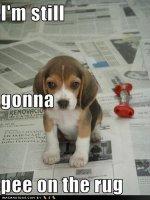 cute-puppy-pictures-still-pee1.jpg