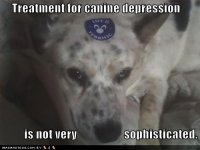 funny-dog-pictures-treatment-for-canine-depression.jpg
