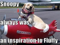 funny-dog-pictures-snoopy-inspiration.jpg