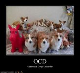 funny-dog-pictures-corgi-disorder.jpg