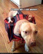 funny-dog-pictures-sub-woofers-238x300.jpg