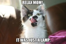 Just-a-lamp-Funny-Cat-Memes.jpg
