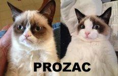 grumpy-cat-depression-prozac-709436.jpg