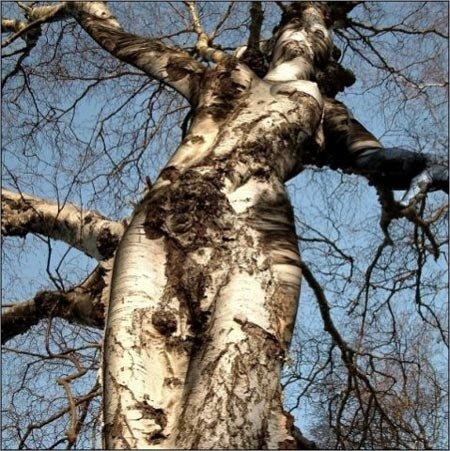 amazing_tree-1.jpg