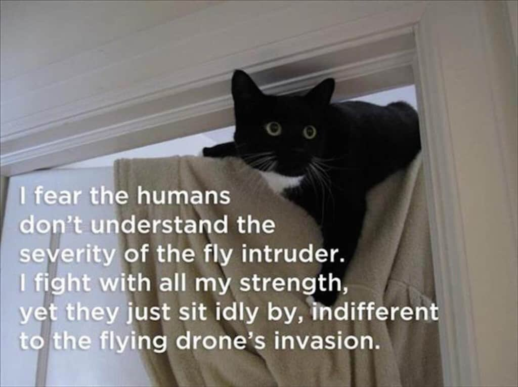 es-and-photos-about-the-hazards-of-cat-ownership-7.jpg