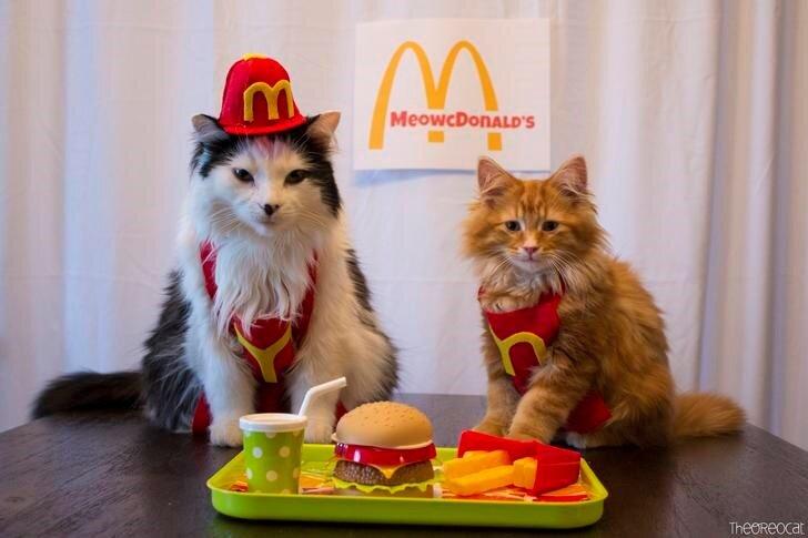 mcdonalds-cute-cats-jobs.jpg
