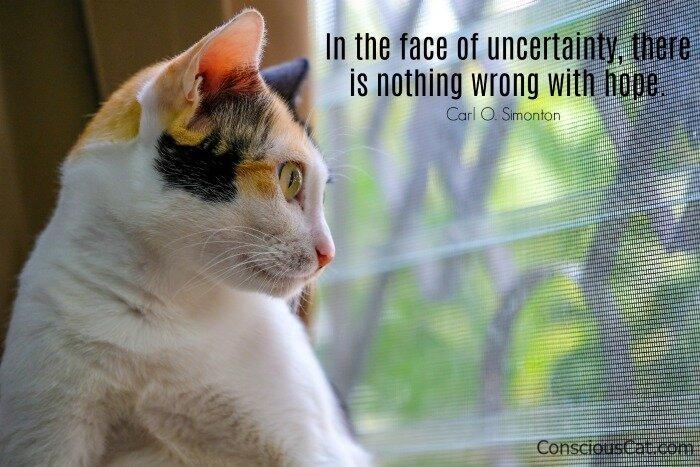 cat-window-uncertainty.jpg