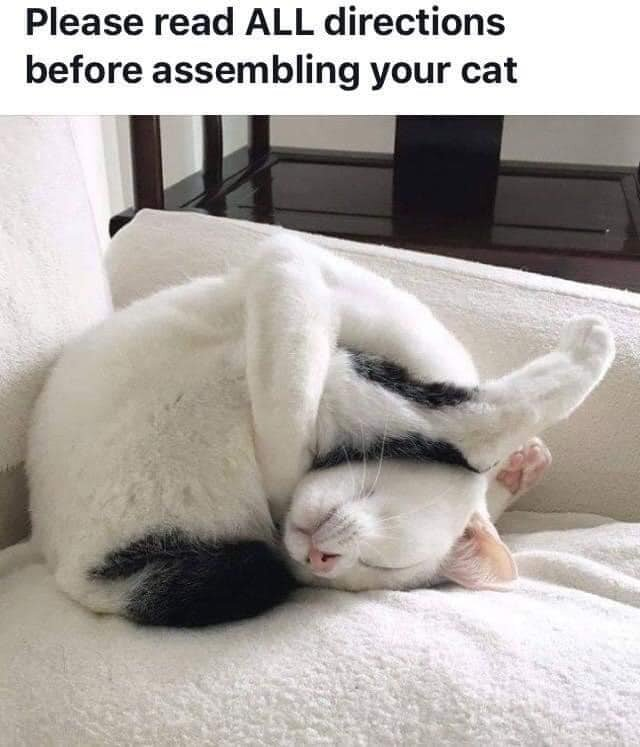 cat-assembly.jpg