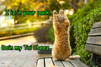 funny-pictures-cat-does-tai-chi-1.jpg