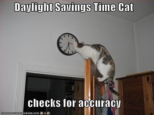 gs-time-cat-checks-accuracy-1ganhascheeze-urgercom.jpg