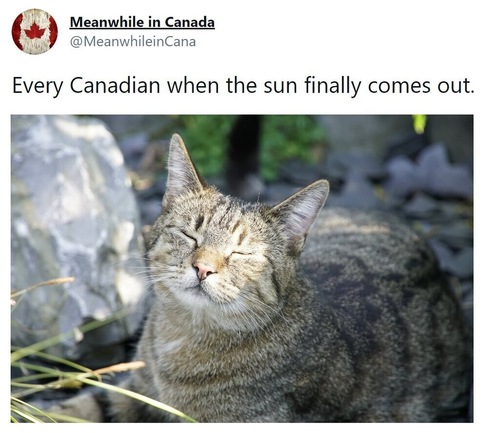 ly-comes-out-happy-cat-with-face-in-sun-1616695843.jpg