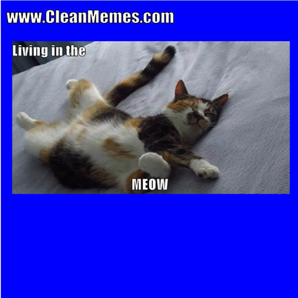 2themeow.png