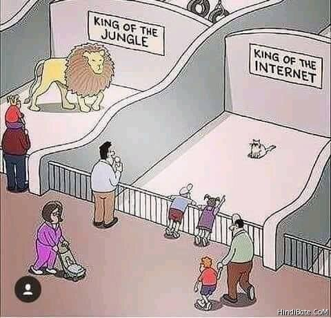 ng-of-the-jungle-vs-king-of-the-internet-meme-1133.jpg