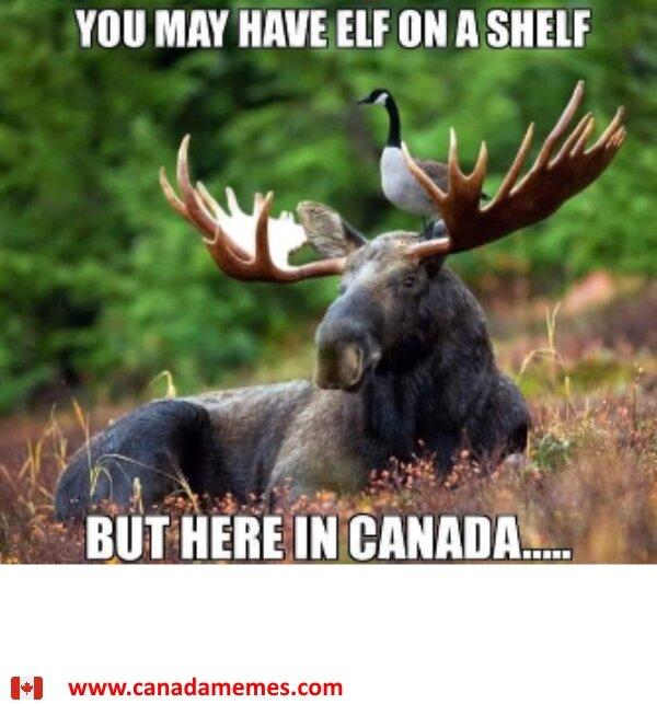 goose-on-a-moose-13291-1.jpg