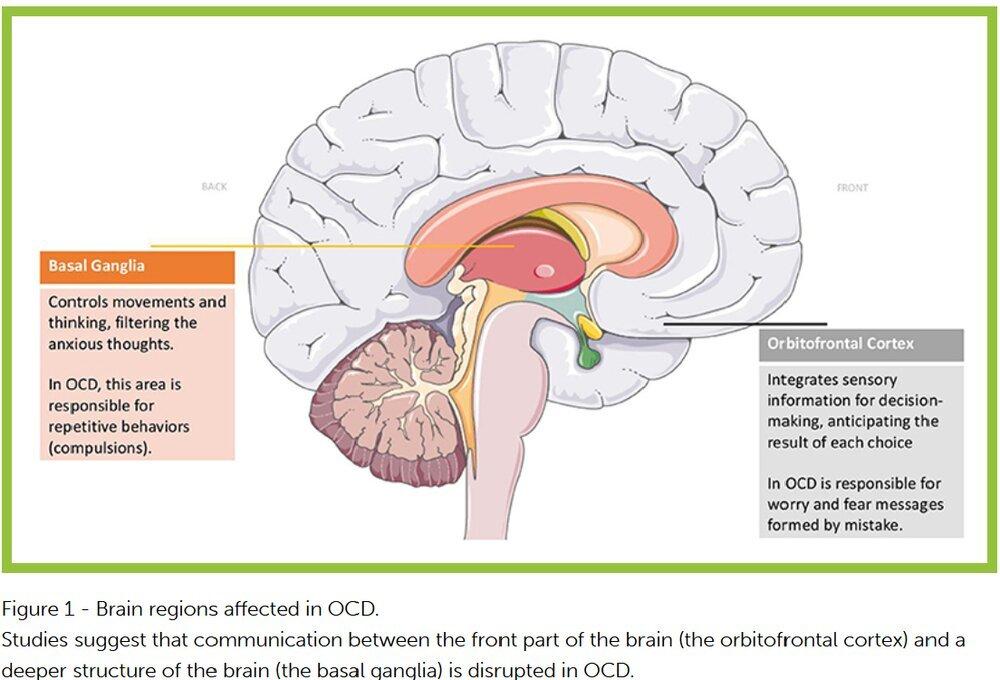 brain-regions-ocd.jpg