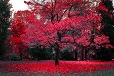 bc_autumn.jpg