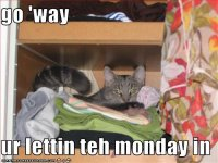 funny-pictures-cat-says-you-are-letting-the-monday-in.jpg