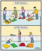 kitten school.jpg