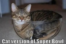 super-bowl-for-cats.jpg