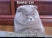 1f24546e335107fe942e1ea4fb8ed92f--funny-cats-funny-animals.jpg