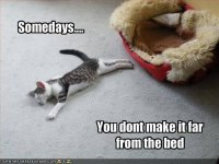 fa4b633d689b95cd0aa1771850e03efa--animal-sayings-animal-memes.jpg