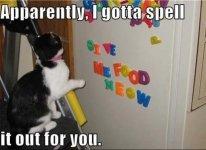 cat-humor-hungry-cat-gotta-spell-it.jpg