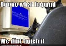 funny-pictures-cats-computer-blue-screen-death.jpg