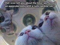 funny-cats-stare-lights-off.jpg