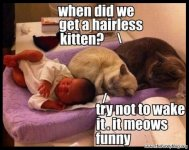 funny-cats-meme-photo-picture-when-did-we-get-a-hairless-kitten-it-meows-funny.jpg