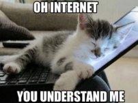 cat-meme-internet.jpg