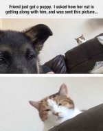 the-best-funny-pictures-of-new-puppy-cat-not-happy.jpg