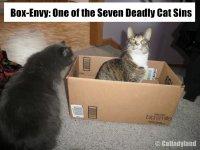 Box Comic Saffy Phoebe Funny Cats.JPG