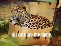 funny-picture-all-cats-are-the-same.jpg
