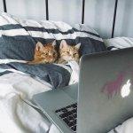 chat-roux-tv.jpg