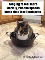 dutch oven-cats-funny-comics-phoebe.JPG