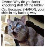 cat-knocking-stuff-off.JPG