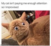 not_paying_enough_attention.jpg
