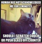0689cb3c574229d11ef4be42d1efc65f--humorous-cats-funny-cats.jpg