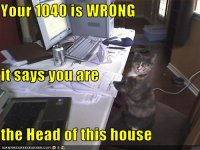 funny-pictures-cat-does-your-taxes.jpg