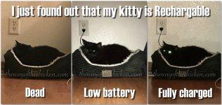 funny-meme-memes-cat-black.jpg