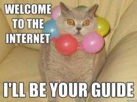 marketing-cat-meme-0019-300x226.jpg