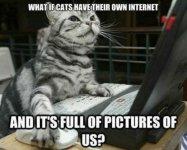 cat-meme-5.jpg