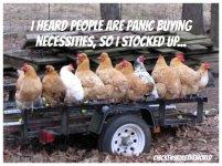 coronavirus-chickens-meme.jpg